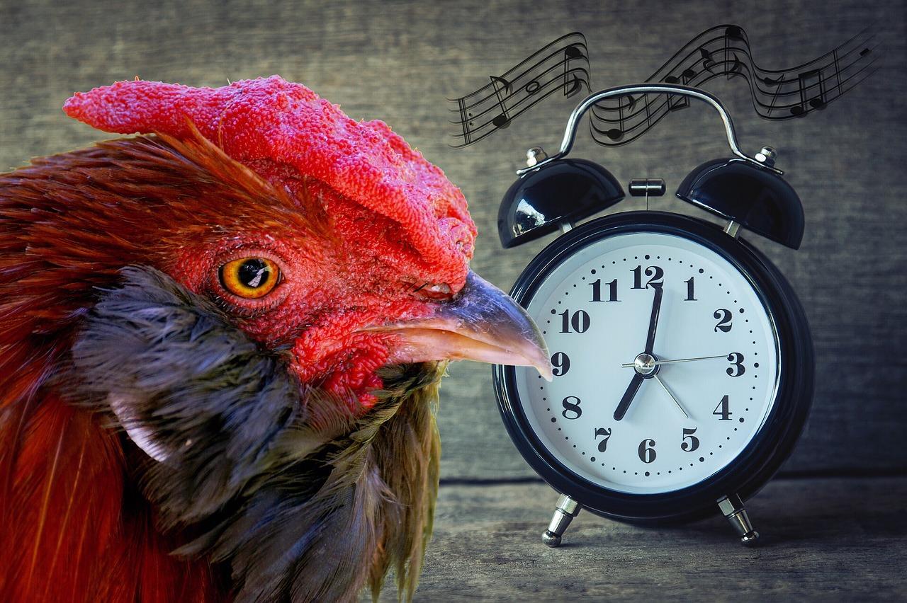 Niczym ranne ptaszki :)
