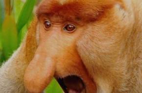 Czy ktoś widział w dżungli mróz?