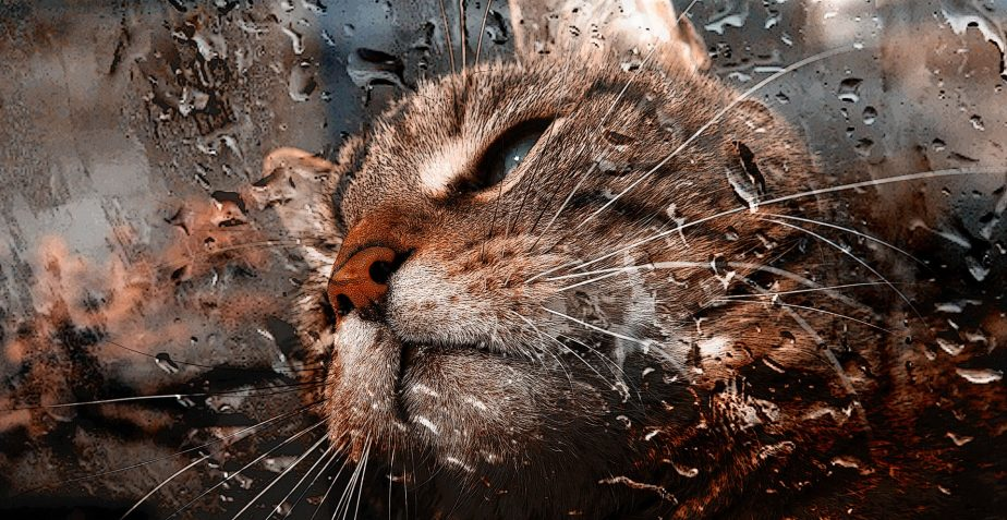 Koty płaczą… u nas na niby ;)