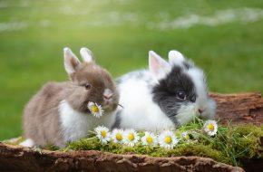 Przed i po Wielkanocy