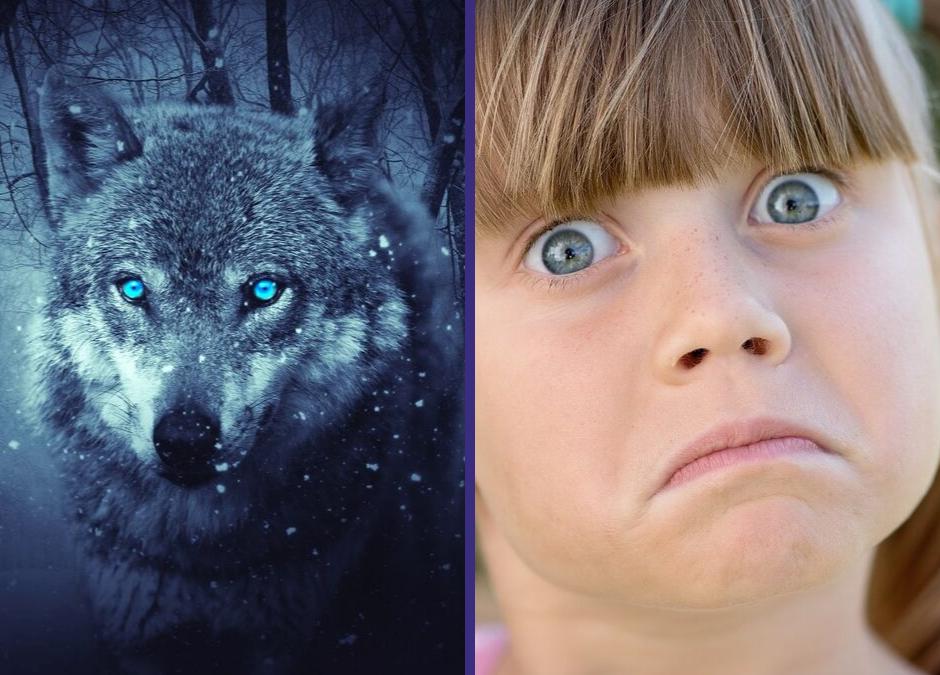 O patrzeniu wilkiem